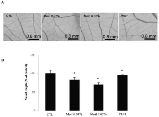 Mastic oil attenuates tumor-related angiogenesis. Tumor cells pre-treated with vehicle (CTL), Moil (0.01-0.02 % v/v) or POH (0.5 mM) for 2 h were applied onto the CAM and further incubated for 48 h at 37 °C in the presence of test agents. (A) Representative photographs of vessel networks in the CAM; (B) Graphs from image analysis of vessel network length (mean % of control ± SEM, n = 30, *P<0.05 from vehicle.