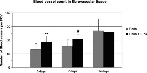 Morphometric analysis of number of blood vessels. Grey bar = fibrin; black bar = fibrin + EPC. #P < 0.05 versus Fibrin at day 7; **P < 0.05 versus Fibrin at day 3. N= 6 constructs per group and time-point.