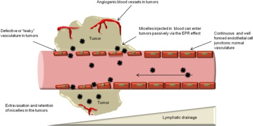 Enhanced permeability and retention (EPR) effect and passive targeting. Nanocarriers can extravasate into the tumors through the gaps between endothelial cells and accumulate there due to poor lymphatic drainage.