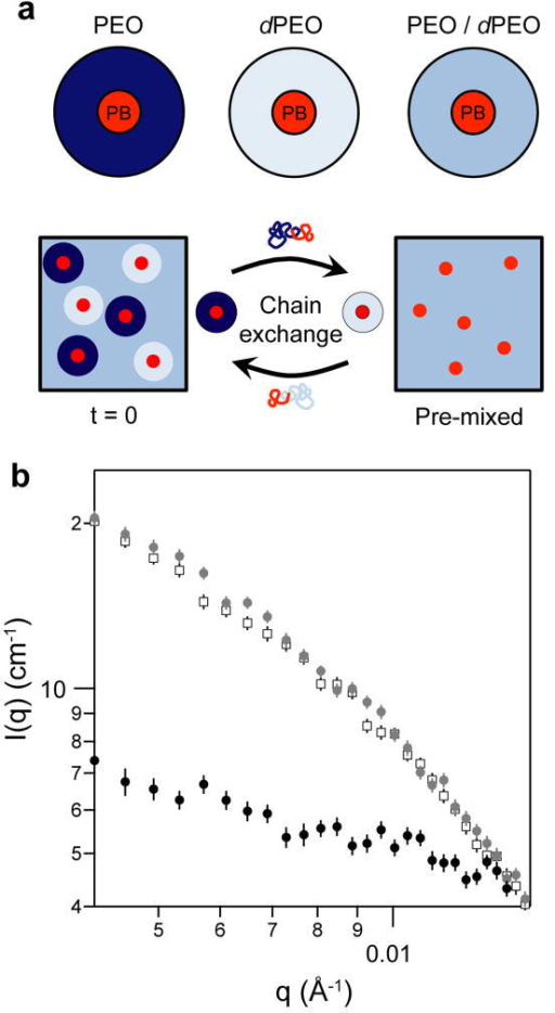 SANS results showing negligible chain exchange over 10 days(a) Illustration of small angle neutron scattering (SANS)experiments used to probe single chain exchange in micelle solutions. The scattering of initially segregated micelles poly (butadiene-b-ethylene oxide) [PB-PEO (top left) ] and poly(butadiene-b-ethylene oxide-d4) [PB-dPEO (top centre) ] was monitored in solvents that were contrast-matched to the corona in a mixed micelle system[PB-PEO/dPEO (top right) ]. (b)SANS curves showing the measured scattered intensity from pre-mixed PB-PEO/PB-dPEO micelles (black circles) and mixtures of PB-PEO and PB-dPEO micelles immediately after mixing (open squares) or 10d after mixing (gray circles) in D2O/H2O at 25°C.