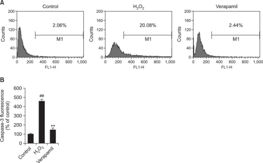 Flow cytometric analysis of verapamil on the expression of Caspase-3 in HLEC. (A) Representative cytometric profile of Caspase-3 in HLEC. The percentage of Caspase-3 was successively 2.06%, 20.08% and 2.44%, in control group, H2O2 group and verapamil group (B) Caspase-3 fluorescence intensity.