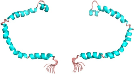 3D structure of human apolipoprotein C3 (APOC3). Image shows the NMR structures of the front (left) and back (right). This representation shows the secondary structures [helices are cyan and turns, pink].