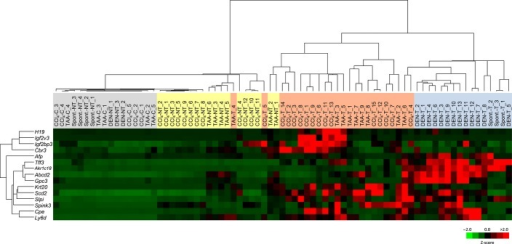 Heatmap of 2-D hierarchical clustering of mRNA expression of 15 tumor-associated genes in four different liver tumor models: CCl4-induced, diethylnitrosamine (DEN)-induced, thioacetamide (TAA)-induced, and spontaneous.