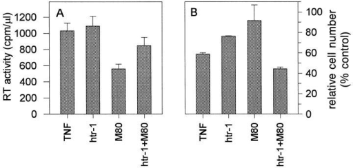 Coactivation of TNFR60 and TNFR80 downregulates HIV  production and enhances cell death. ACH-2 cells were cultured for 3 d in  the presence of TNF (100 ng/ml) and TNFR-specific antibodies (htr-1,  1/50; M80, 40 μg/ml) as indicated. (A) RT activity (mean values SD of  five replicate cultures) was determined in the supernatants as described in  material and methods. (B) Total cell number of ACH-2 was determined  by the FDA method from the groups shown in A in parallel. Data are expressed as relative cell numbers (100% = untreated cells).