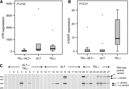Telomerase gene expression in liposarcoma samples. (A) hTR expression taken as a percentage of the riboprotein S15; (B) total hTERT expression in ng per μl. The grey box defines 25 and 75% quartiles, while error bars represent the first and 99th percentiles of the distribution. Dots represent outliers and the black line defines the median of the distribution. P-values were calculated using the Kruskal–Wallis test, which tests the likelihood of all medians being the same. (C) Four major hTERT splice variant PCR products were quantified using the Agilent Bioanalyser.