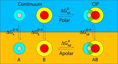 Illustration of the thermodynamic cycle for a coupled ion transfer from polar to apolar phase. For simplicity the ion-pair assumes CIP state during the transfer. Ions and their solvation shells are depicted with concentric spheres. The overlap of the solvation shells in the CIP state is shown in green.