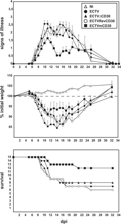 Expression of murine soluble CD30 attenuates mousepox development.Groups of 15 susceptible BALB/c mice were infected intranasally with 100 pfu each of the indicated viruses and scored daily for signs of illness and weight loss. Survival rates are shown on the bottom panel.