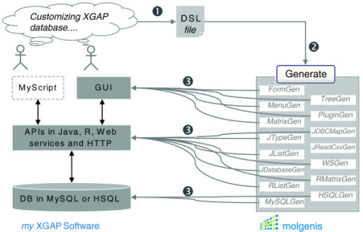 Auto-generation of XGAP software. Open source generator tools are used to produce a customized XGAP software infrastructure. 1, The XGAP object model is described using the MOLGENIS' little modeling language (Figure 4). 2, Central software termed MolgenisGenerate runs several generators, building on the MOLGENIS catalogue of reusable assets. 3, At the push of the button, the software code for a working XGAP implementation is automatically generated from the DSL file. GUI and APIs provide simple tools to add and retrieve data, while the reusable assets of MOLGENIS hide the complexity normally needed to implement such tools. For customization, only simple changes to the XGAP model file are required; the MOLGENIS generator takes care of rewriting all the necessary files of SQL and Java software code, saving time and ensuring a consistent quality.
