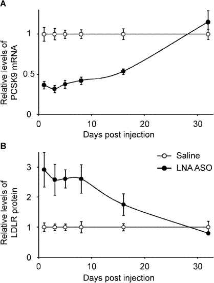 Duration of action after a single i.v. injection in mice.A single injection of 20 mg/kg LNA ASO generated a significant reduction of PCSK9 mRNA lasting for more than two weeks (A), with concomitant increase in LDLR protein (B). Levels were normalized at day 32. (Mean and SEM, n = 4–5).
