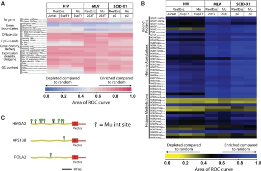Mu-mediated integration site recovery. (A) Integration frequency near genomic land marks. (B) Integration frequency near sites of histone methylation, acetylation or bound chromosomal proteins. Data sets compared are indicated by the column headings, features analyzed by the rows. Heat maps were constructed using the receiver operating characteristic (ROC) area method to compare the observed distributions to random distributions of integration sites (23,45). ROC areas of 0.5 indicated integration sites are present near the indicated genomic features as often as expected by chance. ROC areas >0.5 indicate positive association and areas <0.5 negative association. Associations are colour coded as indicated by the key at the bottom of each map. In (A), for the Gene Density, Expression Density and GC content measures, several different length genomic intervals were used for comparisons, which are indicated by numbers to the right of the black bar. In (B), ChIP-seq analysis was used to map the genome-wide distributions of sites of histone post-translational methylation or acetylation, or bound DNA binding proteins (41–44), and the results compared with integration site distributions. Statistical analysis shows that most associations where discernable colour can be seen in a heat-map tile achieve statistical significance. (C) Comparisons of the numbers and positions of Mu integration sites that allowed recovery of the vector integration sites at HMGA2, VPS13B and POLA2 generated during gene therapy for β-thalassemia.