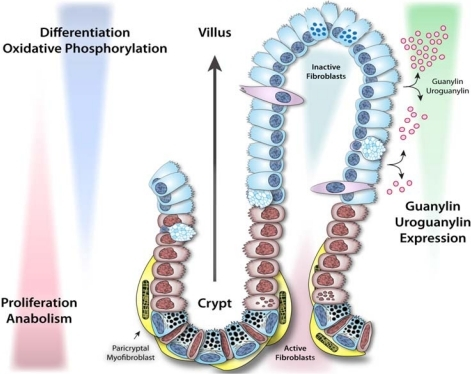 what is the relationship between villi and microvilli