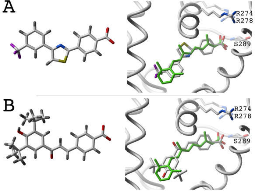 Structure of the novel RAR agonists. Agonists 1 and 2 are shown (respectively A and B). Left: chemical structure of the compounds. Right: Representation of the compounds docked into the binding pocket of RAR (important residues are displayed as sticks: R274, R278, S289), and superimposed with the crystal structure of all-trans RA (green). The receptor is represented as a white ribbon. Hydrogens are not displayed for clarity. Color coding: carbons, oxygens, nitrogens, sulfurs, fluorides and hydrogens are colored white, red, blue, yellow, magenta and gray respectively.