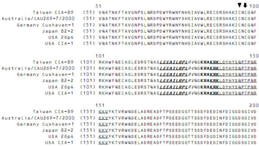 Analysis and predication of NLS and NES motifs present in the VP2 amino acid sequence. The various VP2 amino acid sequences (51 to 200) from different CAV isolates were aligned as described in the Materials and Methods. The putative NLS motifs (BiNLS1: under line and NLS2: bold words) and NES motifs (under line, bold, shadow and Italic) are shown. The cysteine residues at positions 95 and 97 in the catalytic motif of VP2 are also indicated by an arrow and an arrow head, respectively