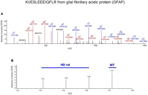 Sample iTRAQ analysis and iTRAQ ratio (tgHD: WT) for glial fibrillary acidic protein (GFAP) in hypothalamus.(A) Full scan MS/MS event for a single identified parent ion from GFAP with its multiple b and y series daughter ions is shown. (B) Successively expanded MS/MS spectra for identifying the low mass range end of the MS/MS scan event. The isobaric mass tag labels added were 114, 115 and 116 for tgHD rat samples and 117 for WT control samples.