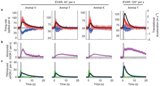 Population responses, eye movements and model simulations during steady-state TWR(a) Average changes in firing rate (lines) and confidence interval (bands) following tilt in PD (red) or anti-PD (blue) (n = 21, 20 and 17 cells in animals V,T and K at 45°/s, n = 11 in animal T at 120°/s). Superimposed black lines show the simulated estimate of translational acceleration induced by TWR. Neural responses are shown in spikes per s and simulated translation is shown in units of m.s−2 (left and right ordinate, respectively). Peak responses in each animal have approximately the same amplitude, ~1.5 m.s−2, which matches the slope of the regression line shown in Fig. 5a (as both represent a decoded acceleration signal). (b) Horizontal eye velocity that reflects the induced erroneous translation signal5. (c) Actual tilt aVOR (green) and induced (cyan) vertical aVOR. The confidence intervals are too narrow to be visible. Superimposed black lines show the simulated estimate of the induced tilt signal (scaled by a factor of 0.8 to be compared with the induced aVOR). The tVOR (b) and aVOR (c) were evaluated using 219, 780 and 1018 trials in animals V,T and K at 45°/s, and 495 in animal T at 120°/s.