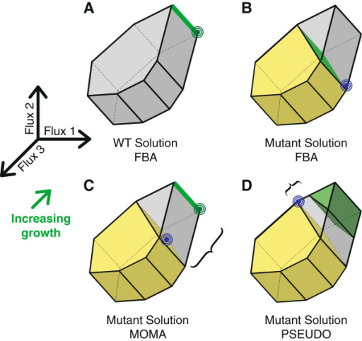 FBA, MOMA and PSEUDO approaches to predicting metabolic fluxes. (A) In FBA wild-type flux space is constrained to a polytope defined by thermodynamic and conservation-of-mass requirements. A linear objective describing cell growth, the green arrow, is maximized within this region. If the growth vector is perpendicular to a facet of the constrained polytope then a range of fluxes allow equally optimum growth, indicated by the heavy green edge. However, a linear programming solver can return only a single optimal point, the green target. (B) Mutations are represented as additional linear constraints that reduce the size of the allowed flux polytope. The yellow region represents the subset of wild-type fluxes allowed under a mutation. FBA finds a new optimum within this space as for the wild type. The green face represents a range of equally optimal mutant solutions. The blue target is a single point that a solver might return. (C) MOMA is an alternative approach for predicting mutant fluxes. The point in the mutant region, blue target, is found that minimizes the distance to a wild-type solution, green target. If FBA was used to generate the wild-type solution, then alternative optima may exist along the heavy green edge. (D) The PSEUDO strategy does not use FBA to select a wild-type flux vector. Instead we define a degenerate optimal region that contains all flux distributions capable of supporting near-maximal growth. A solution within the mutant region is found with minimum distance to this degenerate optimal region. Note that PSEUDO may select a point in mutant flux space different from the MOMA solution and closer to the growth-optimal region.