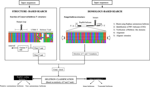 Pipeline for helitron identification in theP. ostreatusPC9 and PC15 genomes.