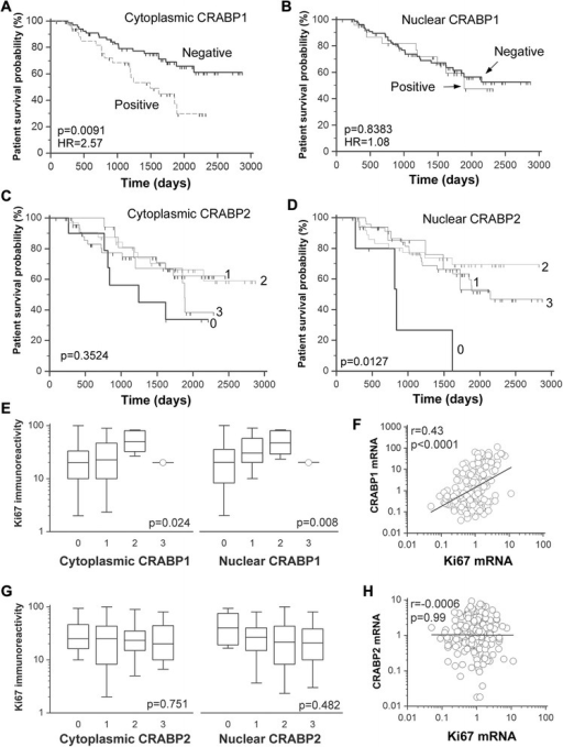 "Associations of subcellular CRABP1 and CRABP2 levels with breast cancer patient survival and Ki67 immunoreactivity. CRABP1, CRABP2 and Ki67 protein levels were determined by immunohistochemical analysis of a TMA containing triplicate cores for each tumor from a 120 primary breast tumor cohort. a-b Association of cytoplasmic and nuclear CRABP1 levels with patient survival. c-d Association of cytoplasmic and nuclear CRABP2 levels with patient survival. e Positive correlation of cytoplasmic and nuclear CRABP1 protein levels with Ki67 immunoreactivity. f Positive correlation of CRABP1 and Ki67 mRNA levels based on gene microarray analysis. g No significant correlation was observed between subcellular CRABP2 levels and Ki67 immunoreactivity. h No correlation was evident between CRABP2 and Ki67 mRNA levels. HR, hazard ratio; p, statistical significance level; r, correlation coefficient. Scores: 0, negative; 1, weak; 2, intermediate; 3, strong. As the size of samples expressed CRABP1 is small in our TMAs, tumor samples were classified into ""positive"" and ""negative"" groups for survival analysis"