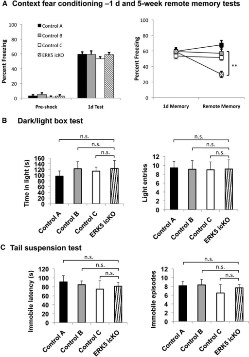 The same cohort of ERK5 icKO mice that show impaired hippocampus-dependent memory do not exhibit anxiety/depression-like behavior. A, ERK5 icKO mice are impaired in remote memory when the erk5 gene was inducibly deleted. Data are from Figure 2 of Pan et al. (2012a). **p < 0.01. B, C, These mice are not deficient in a dark/light exploration test (B) or tail-suspension test (C), performed sequentially after the remote memory test. n.s., Not significant.