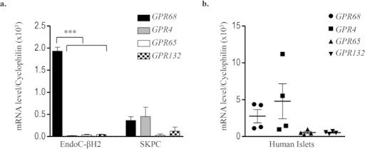 Expression of proton sensing GPCRs in EndoC-βH2, SKPC and human islets.Transcript levels of proton sensing GPCRs (GPR68, GPR4, GPR65 and GPR132) determined by RT-qPCR in (a) EndoC-βH2 cells compared with ductal carcinoma SKPC cell-line; (b) human islet preparation. Data represented as mean values ± SEM of at least 3 independent experiments. ***p < 0.001; (one-way ANOVA, followed by a Tukey's multiple comparisons post-test).