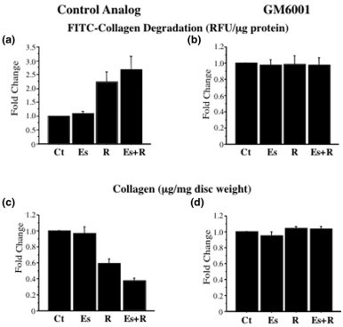 Relaxin-induced collagenase activity contributes to loss of disc collagen. Conditioned medium from disc incubated with control medium (Ct), β-estradiol (Es), relaxin (R), or β-estradiol plus relaxin (Es+R) in the presence of the matrix metalloproteinase inhibitor GM6001 or its control analog was subjected to fluorescein isothiocyanate-labelled collagen degradation assay. The collagenase activity (relative fluorescence units [RFU]/ml) was standardized by the dry weight of the tissue (mg), and fold changes (means ± SD) were plotted (a, b). Disc digests from these experiments were assayed for collagen with the Sircol assay, and the results were standardized to tissue dry weight (mg). Fold changes in collagen concentration (means ± SD) were calculated and plotted (c, d). The untreated control (Ct) discs used in all experiments were exposed to control analog only. ** P < 0.01, *** P < 0.0001 by Fisher's test.