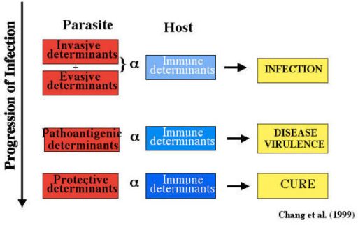 A hypothetical model to explain virulent phenotype in leishmaniasis. The three groups of determinants are thought to interact with host immune system independently, but may progress sequentially to produce the spectrum of subclinical and clinical manifestions as the basis of virulent phenotypes seen.