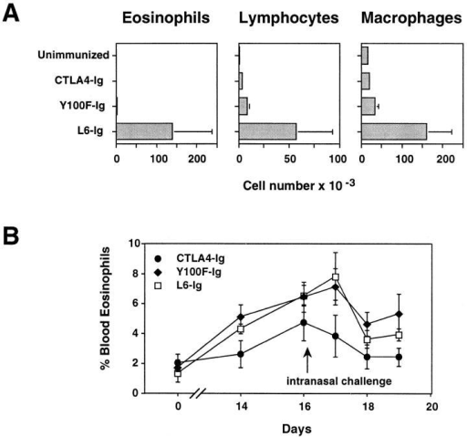 Treatment with Y100F-Ig inhibits lung (A) but not blood  (B) eosinophilia in OVA-immunized, airway-challenged mice. C57BL/6  mice were primed twice i.p. with 2 μg OVA in alum adjuvant on day 0  and day 10 then given an intranasal challenge with 100 μg OVA in PBS 4  d after the last i.p. immunization. BAL fluid was collected 4 d after intranasal challenge. Differential cell counts were made on BAL cytospins and  blood smears stained with Diff-Quik. Mice were treated i.p. with 400 μg  of either CTLA4-Ig, Y100F-Ig or L6-Ig every 48 h. Values represent the  mean ± SE for groups of 5–7 mice. Results shown are representative of  four (A) and two (B) experiments.