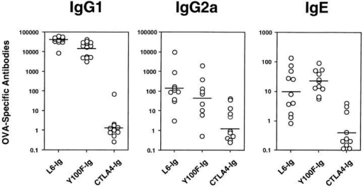 Treatment with  CTLA4-Ig, but not Y100F-Ig,  inhibits the production of OVAspecific IgG1, IgG2a and IgE.  Mice were treated with CTLA4Ig, Y100F-Ig or L6-Ig and  subjected to a protocol of OVA  immunization and airway challenge as detailed in Fig. 2. Serum  was collected at the time of death  and OVA-specific antibody levels determined by ELISA. Values  represent serum antibody titers  for individual mice. Shown are  the results of two pooled experiments.