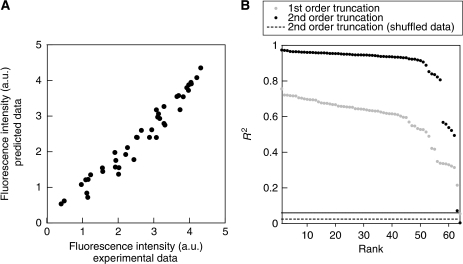 Predicting the activity from a small number of samples. (A) Correlation between the predicted and experimental data (Figure 4A) on using '111111' as a reference sequence to obtain up to the 2nd order Bahadur coefficients. R2=0.933 was obtained. (B) The rank order plot (or cumulative frequency distribution) of the 64 R2 values, obtained from the correlation between the experimental and predicted data calculated using each of the 64 reference sequences. Predicted data were calculated by 2nd (black circles) or 1st (gray circles) order truncation of equation (m4). The gray dashed line and the bold line show the average and s.d. of the R2 value obtained, respectively, when the prediction strategy of using up to the 2nd order Bahadur coefficients was applied to predict the respective 100 data sets in which the sequence–activity relationship was shuffled randomly.