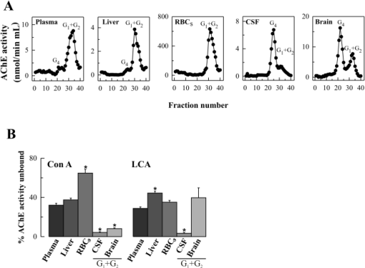 AChE molecular form and lectin-binding profile in human plasma, liver, RBCs, CSF and brain (frontal cortex).(A) Representative profiles of AChE molecular forms (G4 = tetramers; G1+G2 = monomers and dimers). (B) Comparison of Con A and LCA binding of AChE. Plasma, CSF and total extracts from liver, RBCs and brain (n = 6 for each group) were incubated with immobilized lectins, AChE activity was assayed in the supernatants and the percentage of (%) AChE activity unbound to lectins was calculated. For total CSF and brain extracts, both rich in tetramers, the % AChE unbound to Con A (%Unb Con ACSF = 3±1; %Unb Con ABrain = 4±1) and to LCA (%Unb LCACSF = 4±1; %Unb LCABrain = 17±2) were determined. Additionally, individual G4 and G1+G2 fractions, separated by sucrose gradient centrifugation, from CSF and brain extracts (n = 5), were also pooled, dialyzed against Tris-saline-Triton X-100 buffer, and concentrated by ultrafiltration. AChE peaks were then assayed by incubation with immobilized lectins, and the percentages of unbound enzymatic activity were calculated. For CSF tetramers, the %Unb Con A was 0.9±0.5; and the %Unb LCA was 0.3±0.1. For brain tetramers, the %Unb Con A was 1.3±0.2; and the %Unb LCA 2.4±0.2. Please note differences in lectin binding for total AChE from brain or CSF, or its enriched G4 fractions, when compared to the respective G1+G2 peaks (see Figure), revealing distinct glycosylation patterns for different AChE molecules. Values are means± SEM *p<0.05, significantly different from plasma samples, as assessed by one-way analysis of variance with Bonferroni posttest.