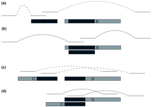 Mis-assembled DCC and DOC. Assemblers may mistakenly form two contigs from the two haplotypes, as shown in (a) where contig A contains heterozygous sequence and contig B contains homozygous sequence (light) on both sides of a matching heterozygous region (dark) (with sequencing reads as lines above them). We refer to A as a duplicated contained contig (DCC). We can identify this situation by finding an alignment between contigs A and B that completely covers contig A and comparing contig A's mate pair links in the original location to those same links when contig A is overlaid on contig B at the location of its alignment, as shown in (b). Dashed curves in (a) indicate distances that are significantly shorter (left side of figure) or longer (right) than expected; solid curves indicate distances that are consistent with specifications. In the situation shown here, we would designate contig A as an erroneous duplication likely to have been caused by haplotype differences. Alternatively, heterozygous sequence may be separated into two contigs that each include some homozygous sequence on opposite ends, as in contigs C and D in (c), which we refer to as duplicated overlapping contigs. If a significant alignment exists between the ends of these contigs and the distances between mate pairs pointing right from contig C and left from contig D better match their expected fragment sizes when the contigs are joined, we designate the region as an erroneous duplication and join the contigs as in (d).