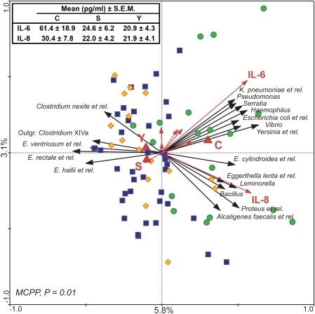 Correlation between microbiota composition and plasma levels of pro-inflammatory cytokines.In the RDA blood cytokine levels (red arrows) and age groups (C, S, and Y, red triangles) are used as linear and nominal environmental variables, respectively. Samples belonging to C, S and Y groups are indicated by green circles, blue squares and yellow diamonds, respectively. Responding bacterial subgroups that explained more than 20% of the variability of the samples are indicated by black arrows. First and second ordination axes are plotted, showing 5.8% and 3.1% of the variability in the dataset, respectively. Red arrows which are not labelled corresponds to (clockwise, starting from the left) TNF-α, IFN-γ, IL-2, IL-1α, IL-12p70, and IL-1β. Log transformed data were used for this analysis. Bottom-left, P value obtained by MCPP is reported. Top-left, average blood levels of IL-6 and IL-8 in groups C, S and Y are reported.