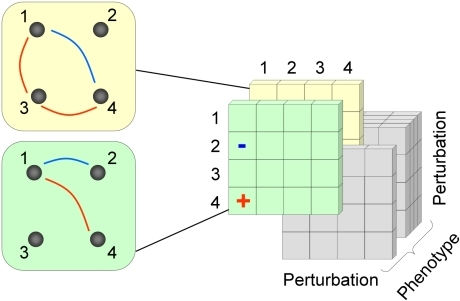 "A schematic representation of the 3D epistatic map.The 3D epistatic map is represented as a 3-dimensional entity (perturbation by perturbation by phenotype). Each ""slice"" of the 3D epistatic map represents an epistatic interaction network, created with respect to a single phenotype. Previous genome-scale studies of epistasis in yeast metabolism have focused on a single ""slice"", whose interactions were computed with respect to the biomass production phenotype."