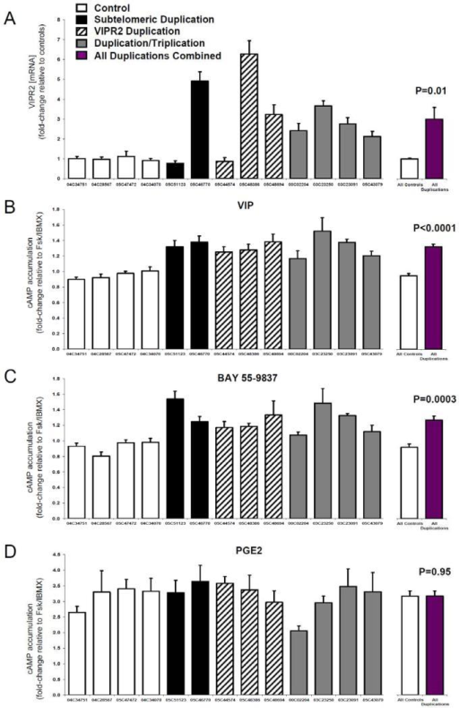 Duplications and triplications of 7q36.3 result in increased VIPR2 transcription and cyclic-AMP signaling(a) Quantitative PCR results of VIPR2 mRNA from lymphoblastoid cell lines. Two to four subjects were tested for each of four genotypes (subtelomeric duplication, VIPR2 duplication, exon 3/4 triplication, and normal diploid copy number as control). Results are expressed as the mean fold-change of CNV carriers relative to the mean of control samples. (b-c) Cyclic AMP accumulation was measured in the same cell lines in response to VIP (100nM) and the VPAC2 agonist BAY 55-9837 (100nM). Results are expressed as fold-change over forskolin/IBMX alone. (d) No significant differences were observed in cAMP response to another GPCR agonist, Prostaglandin E2 (PGE2, 1 μM), demonstrating that the effects are specific to VPAC2. For subjects, error bars represent standard error of the mean computed across replicates. Differences between the groups of 9 duplication carriers and 4 controls were tested using unpaired two sample t-tests.