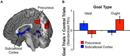Rapid masked promotion and prevention goal priming induced distinct patterns of activation. (A) To identify brain regions associated with activation of a promotion goal, we contrasted ideal goal priming vs. control priming. There was a significant effect for promotion goal priming in both subcallosal cortex and lingual gyrus (shown in blue). Likewise, to identify brain regions associated with activation of a prevention goal, we contrasted ought goal priming vs. control priming. There was a significant effect for prevention goal priming in precuneus and posterior cingulate gyrus (shown in red). (B) The chart displays mean standardized parameter estimates (PEs) at selected sites for the ideal vs. control contrast as well as the ought vs. control contrast. Within the subcallosal cortex (x − 10, y26, z − 10), activation was significant greater in response to ideal priming (vs. control priming). Within the precuneus (x − 32, y14, z46), activation was significantly greater in response to ought priming (vs. control priming).