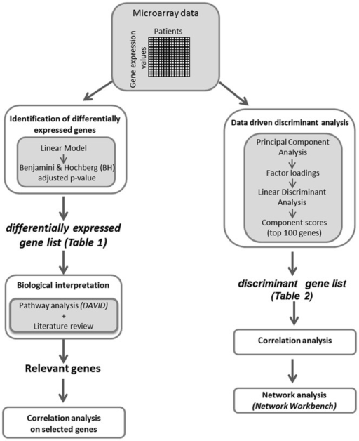 Experimental design.The flowchart schematizes the experimental steps of the statistical analysis of microarray data.