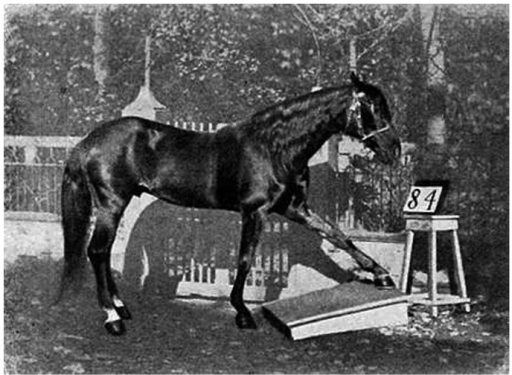"Figure 2. ""Clever Hans"" in action, tapping with his hoof: 8 – 4 = 4, 8 + 4 = 12, 8 / 4 = 2, and 8 x 4 = 32."