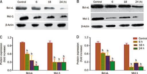 Alpha-mangostin blocks Bcl-xL and Mcl-1 expression in gastric adenocarcinoma cells. BGC-823 (A) and SGC-7901 (B) cells were treated with or without α-mangostin (7 μg/mL) for 6, 18, and 24 h, from which lysates were prepared. Western blot analyses of cell lysates probed for Bcl-xL and Mcl-1. (C, D) Quantification of Western blotting data. Data are representative of three independent assays. bP<0.05 vs control.