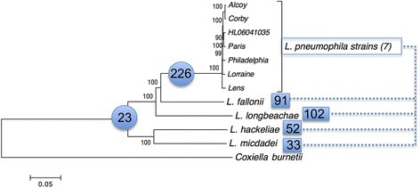 Phylogenetic tree of sixLegionellaspecies and sevenL. pneumophilastrains and their shared Dot/Icm substrates. Neighbor-joining tree based on the concatenation of 816 protein-coding genes from 11 Legionella genomes. C. burnetii was used as out-group. The tree was constructed using MEGA and JTT as model of evolution. The values above nodes indicate the bootstrap values. The values in blue circles represent the number of Dot/Icm substrates shared by the species in the corresponding cluster, suggesting that they were present in the common ancestor. The values inside blues squares are the number of Dot/Icm substrates shared between L. pneumophila strains and the remaining species (for example, the species L. micdadei and L. pneumophila share 33 Dot/Icm substrates).