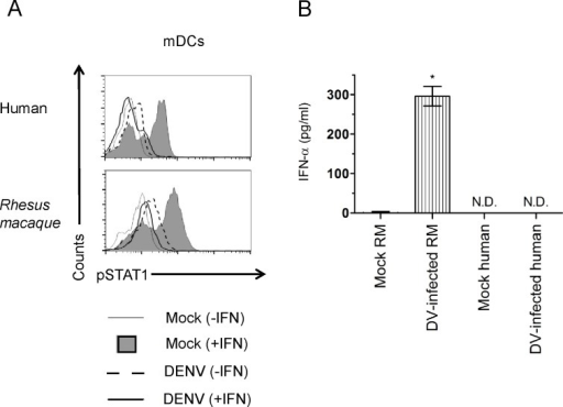 DENV2 16681 blocks STAT1 phosphorylation but can't inhibit production of IFN-α in primary myeloid dendritic cells.Dendritic cells from representative were mock-infected or infected with DENV-1 16681 at an MOI of 5 for twenty-four hours. (A) Cells were stimulated for 30 min. with IFN-β (500 U/ml) and co-stained with anti-pSTAT1 Alexa 647- and anti-dengue prM Alexa 488-conjugated antibodies. Cell fluorescence was measured on a BD FACS Calibur and data analysis was conducted using FlowJo software. (B) The concentrations of IFN-α in the supernatants were quantified by ELISA. Results shown for flow cytometry are representative of two human and two Rhesus macaque samples. Results shown for IFN-α production were done in triplicate and represent the values obtained from two Rhesus macaques.