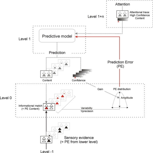 Attention in the predictive coding framework. The predictive (generative) model makes inferences on the content of and the confidence in the sensory evidence [i.e. the prediction error (PE) from a previous level]. The difference between the input and the content of the prediction is expressed in the PE, which updates the model. Sensory ERPs are understood as the transient expression of the PE. Once the input is explained by the prediction, the perceptual problem is solved and we perceive our interpretation of the world. The relevant content of the inference (attentional template or attentional trace) is what we attend to in a particular experimental situation. Confidence in the attended content is higher than the unattended content. Attention improves the precision of the PE (i.e. it reduces the estimated variability) for the attended content via the predictive model. This results in a modulation of the gain of the PE. Thus, attention will usually increase the amplitude of the PE, which will in turn make the predictive model more accurate. As we usually have several coexisting predictive models, which compete for dominance, attention exerts an indirect bias towards the model that contains the relevant content. The impact of attention on the precision of the PE constitutes an independent factor in the dynamic system of feedback/feedforward recurrent loops, which may interact with other factors of the predictive model (e.g. with the predictability of the input). Thus, the (partly) contradictory effects of attention and prediction reported from ERP research can be explained by the interaction between content prediction and precision estimation.