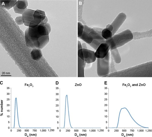 Electron micrographs and hydrodynamic diameter (DH) distributions.Notes: Electron micrographs of ferromagnetic Fe2O3 (A) and ZnO nanoparticles (B). DH distributions of (C) Fe2O3, (D) ZnO and (E) Fe2O3 and ZnO.