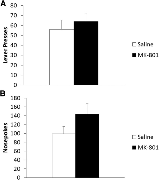 Treatment with systemic MK-801 was without effect on pr-STM. A, Three hours after reactivation MK-801 treated rats (n = 7) showed no significant difference in lever pressing compared with vehicle controls (n = 9). B, MK-801 had no significant effect on short-term nosepoking behavior 3 h after reactivation. Data are represented as mean number of lever presses + SEM.