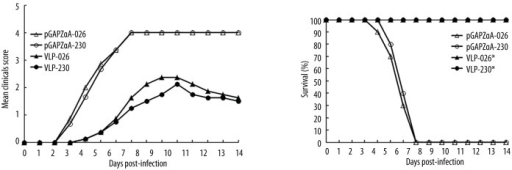In vivo protective efficacy of passively transferred antisera. Groups of one-day-old BABL/c mice were i.p. inoculated with 20 μL of antisera as indicated, and one day later received i.p. challenged with JB141030026 (B1a) or JB141030230 (B1b) as indicated. The survival and clinical scores were recorded daily for up to 14 days post-infection. Clinical scores were graded as follows: 0 – healthy; 1 – reduced mobility; 2 – limb weakness; 3 – paralysis; 4 – death. The logrank test was used to compare the survival curves between each vaccine group and the empty pGAPZαA vector control group. Statistical significance was indicated as follows: n.s. p>0.05; * p<0.05; and ** p<0.01.