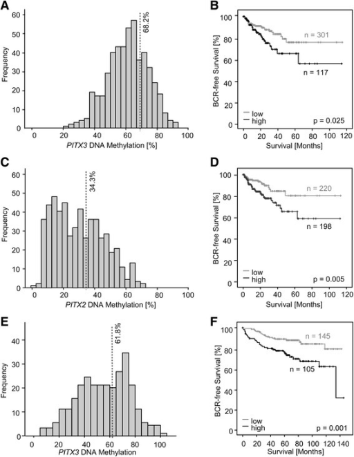 Frequency and prognostic value of mPITX3 and mPITX2 in the training (n = 498) and validation (n = 300) cohorts. PITX3 and PITX2 DNA methylation was analyzed in prostate carcinoma patients from two cohorts. Methylation frequencies (a, c, and e) and Kaplan-Meier analyses of BCR-free survival in patients stratified according to dichotomized mPITX3 and mPITX2 levels are shown (b, d, and f). amPITX3 analysis in the training cohort revealed a symmetric, bell-shaped distribution covering a broad spectrum of values (22–92 %). An optimal cutoff was elaborated by an iterative approach (68.2 %) stratifying patients into mPITX3 hyper- (mPITX3high) and hypomethylated (mPITX3low) cases. b Patient survival in the training cohort according to mPITX3low and mPITX3high status. Patients with mPITX3low tumors show a better prognosis. Approximate mean BCR-free survival: 93 months (mPITX3low, 95 % CI 85–100 months, n = 301) and 76 months (mPITX3high, 95 % CI 63–90 months, n = 117; LR = 5.05; p = 0.025), respectively. cmPITX2 analysis in the training cohort revealed an uneven distribution covering an altogether lower spectrum of values than mPITX3 (5–79 %). An optimal cutoff was elaborated by an iterative approach (34.3 %) stratifying patients into mPITX2 hyper- (mPITX2high) and hypomethylated (mPITX2low) cases. d Patient survival in the validation cohort according to mPITX2low and mPITX2high status. Patients with mPITX2low tumors show a better prognosis. Approximate mean BCR-free survival: 96 months (mPITX2low, 95 % CI 88–105 months, n = 220) and 78 months (mPITX2high, 95 % CI 67–89 months, n = 198; LR = 7.95; p = 0.005), respectively. emPITX3 analysis in the validation cohort revealed a flattened, bell-shaped distribution covering (5–100 %). An optimal cutoff was elaborated by an iterative approach (61.8 %) stratifying patients into mPITX3 hyper- (mPITX3high) and hypomethylated (mPITX3low) cases. f Patient survival in the validation cohort according to mPITX3low and mPITX3high status. Patients with mPITX2low tumors show a better prognosis. Approximate mean BCR-free survival: 125 months (mPITX3low, 95 % CI 118–132 months, n = 145) and 103 months (mPITX3high, 95 % CI 91–115 months, n = 105; LR = 11.17; p = 0.001), respectively. Patient survival in the validation cohort according to mPITX2low and mPITX2high status is reported elsewhere [30]