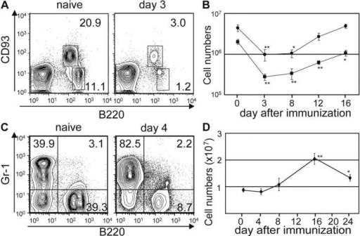 Immunization depletes BM B cells but increases BM granulocyte numbers. BL/6 mice were immunized with NP-CGG/IFA. Lymphocytes and granulocytes from femur and tibia were analyzed by flow cytometry; representative FACS® profiles of BM cells (A, B220 and CD93; C, B220 and Gr-1) 3 or 4 d after immunization. Percentages of gated CD93+B220lo, CD93−B220hi, and Gr-1+B220− cells are given. 3 d after immunization, CD93+B220lo and CD93−B220hi cell numbers fall in the BM (A), whereas Gr-1+B220− cell numbers change little (C). Dynamics of BM B cell (B) or granulocyte (D) populations indicate that B lymphopenia persists for ≥12 d (B), whereas granulocyte numbers increase (D). Points represent mean ± SEM of CD93+B220lo (•), CD93−B220hi (▪), and Gr-1+B220− cells (♦). Asterisks indicate significant differences from controls: *, P < 0.05; **, P < 0.01.