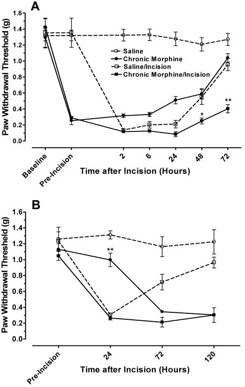 Mechanical nociceptive thresholds after drug pretreatment and hindpaw incision. Panel A displays the mechanical thresholds of mice in four different treatment groups: saline pretreatment/no incision, saline pretreatment/incision, morphine pretreatment/no incision, morphine pretreatment/incision. The values labeled pre-incision represent the nociceptive thresholds measured after 4 days of saline or morphine treatment but prior to hind paw incision. In panel B data are presented representing mechanical nociceptive thresholds in mice undergoing saline or morphine treatment beginning at the time of incision. Nociceptive thresholds were measured immediately before that day's dose of morphine. The statistical analysis presented reflects the results of two-way ANOVA comparing saline/incision values to morphine/incision ones. *p < 0.05, **p < 0.01, N = 6/group.