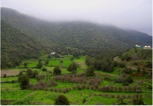 Type Locality Al Bahah Amadan Forest After A Season Of Open I