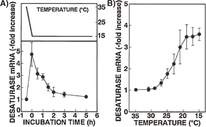 Changes in the level of dasaturase mRNA after (A) or during (B) temperature shift-down (39 ℃ to 15 ℃). T. thermophila grown at 35 ℃ were cooled to 15 ℃ over 25 min. After (A) or during (B) the shift-down to 15 ℃, total RNA was extracted at the indicated time intervals. Data from Nakashima et al. (1996).34)