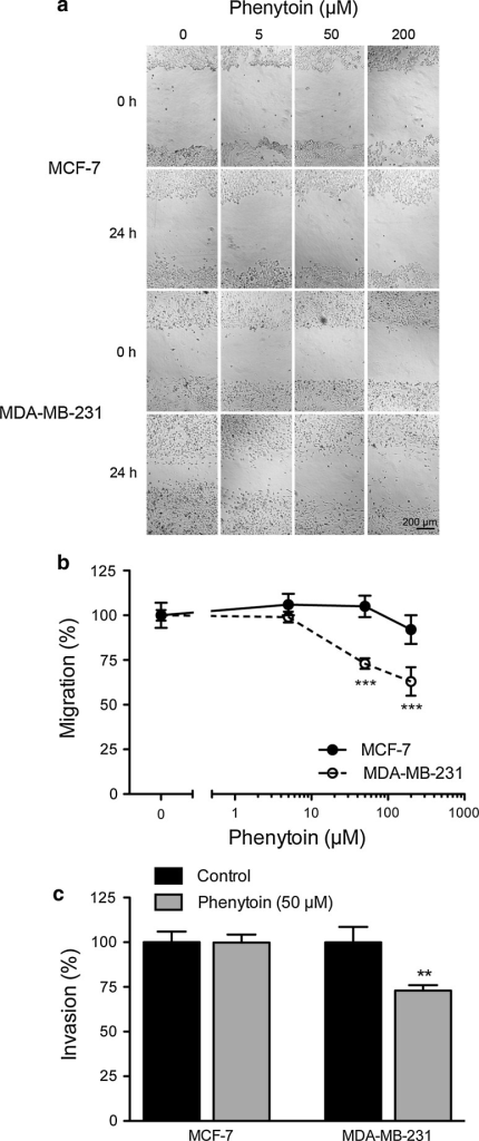 Effect of phenytoin on migration and invasion. a Representative images of MCF-7 and MDA-MB-231 cells in a wound healing assay at 0 h, and 24 h following treatment with phenytoin (5, 50, 200 μM) or vehicle. b Migration of MCF-7 and MDA-MB-231 cells treated with phenytoin (5, 50, 200 μM) or vehicle for 24 h in wound healing assay, normalized to control (n = 135 measurements per condition). c Invasion of MCF-7 and MDA-MB-231 cells ± phenytoin (50 μM) for 48 h, normalized to control (n = 9). Data are mean ± SEM. **P < 0.01; ***P < 0.001